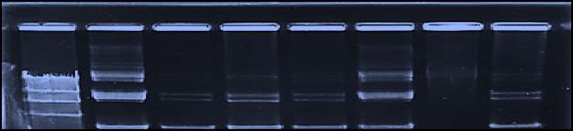 A+K gel (edit)