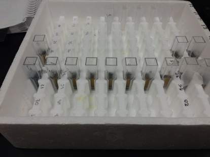 enzyme catalytic assay