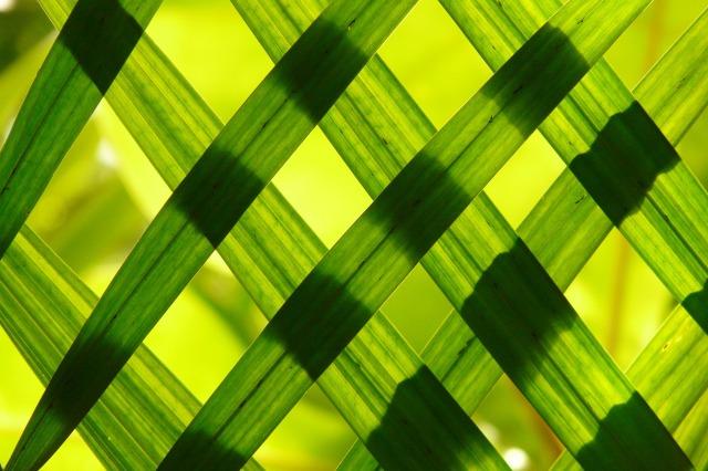 leaves-108969_1920