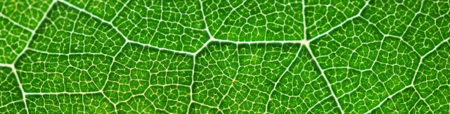 photosynthesis-391447_1920